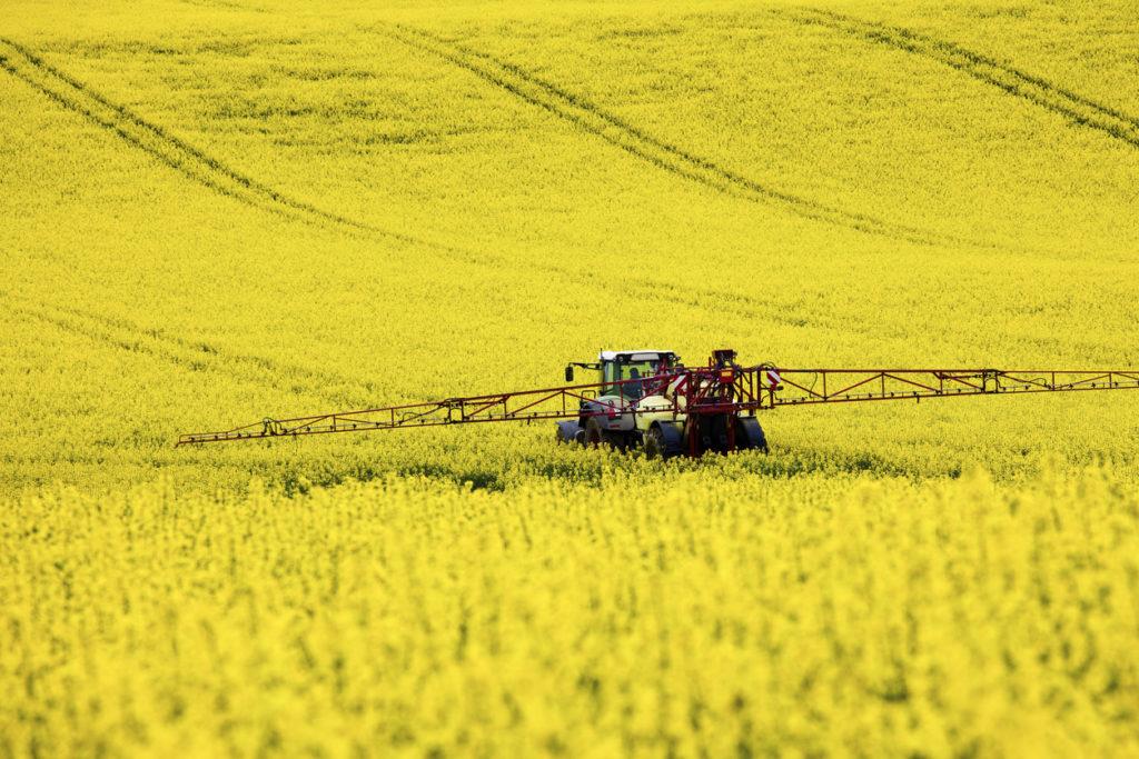Tractor in a field of rape